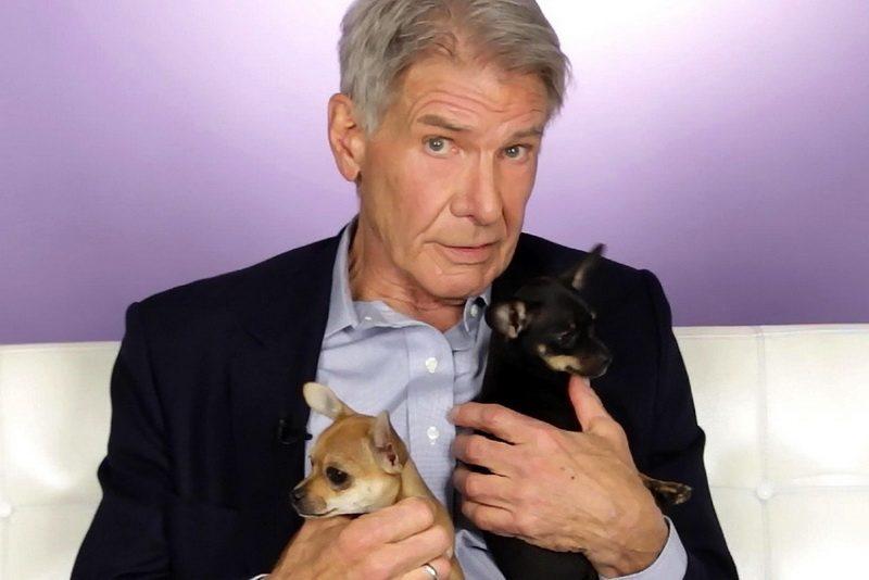 Харрисон Форд с собаками