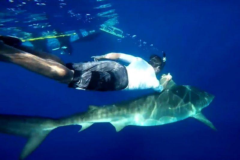 Зак Эфрон с акулой